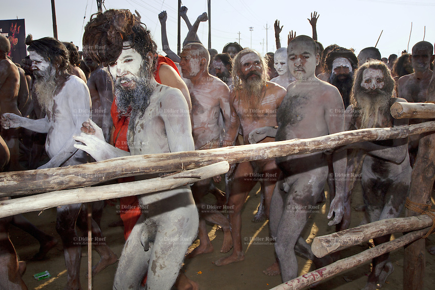 "India. Uttar Pradesh state. Allahabad. Maha Kumbh Mela. Royal bath on Mauni Amavasya Snan (Dark moon). The ritual ""Royal Bath"" is timed to match an auspicious planetary alignment, when believers say spiritual energy flows to earth. Naga (naked) Sadhus celebrate their joy after taking a dip in Sangam and worship the river Ganges. The Naga Sadhus have their bodies smeared with ashes and are followers of Shiva. The Kumbh Mela, believed to be the largest religious gathering is held every 12 years on the banks of the 'Sangam'- the confluence of the holy rivers Ganga, Yamuna and the mythical Saraswati. In 2013, it is estimated that nearly 80 million devotees took a bath in the water of the holy river Ganges. The belief is that bathing and taking a holy dip will wash and free one from all the past sins, get salvation and paves the way for Moksha (meaning liberation from the cycle of Life, Death and Rebirth). Bathing in the holy waters of Ganga is believed to be most auspicious at the time of Kumbh Mela, because the water is charged with positive healing effects and enhanced with electromagnetic radiations of the Sun, Moon and Jupiter. In Hinduism, Sadhu (good; good man, holy man) denotes an ascetic, wandering monk. Sadhus are sanyasi, or renunciates, who have left behind all material attachments. They are renouncers who have chosen to live a life apart from or on the edges of society in order to focus on their own spiritual practice. The significance of nakedness is that they will not have any worldly ties to material belongings, even something as simple as clothes. A Sadhu is usually referred to as Baba by common people. The Maha (great) Kumbh Mela, which comes after 12 Purna Kumbh Mela, or 144 years, is always held at Allahabad. Uttar Pradesh (abbreviated U.P.) is a state located in northern India. 10.02.13 © 2013 Didier Ruef"