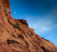 On the road south of Arches National Park, Utah, the gibbous moon rises over slabs of red rock and tenancious scrub.