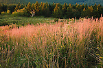 Late summer grasses