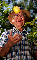Produce stand owner, Tak Yamashita, 89, tosses a lemon in his orhard on Walnut avenue in Oxnard, Calif., on the afternoon of Saturday, May 27, 2006. Tak has been living in the Oxnard area for over forty years, and has, in the past 2 years, opened his lemon stand, bringing the fruits of his labor to the community. (Photo by Bryce Yukio Adolphson/Brooks Institute of Photography, &copy; 2006)<br />