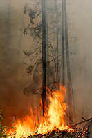 Flames from a forest fire along the Dalton Highway, Alaska