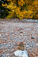 A lone pine cone sits atop a rock in the picnic area at Cisco Grove, perhaps the artistic statement of a previous young visitor.