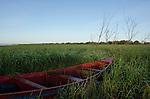 Colônia de pescadores Z24 - Lagoa Mirim. Comunidade de Santa Isabel, no município de Arroio Grande, no Rio Grande do Sul. Os pescadores usam os seus barcos menores para acessarem lugares do banhado que dão muito peixe, mas que são de difícil acesso com seus barcos maiores.