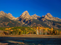 749450351 horses graze on an open field near a cabin and fence line with fall colored aspens and the teton range in the background in grand tetons national park wyoming