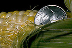Photo stock for Ethanol in the Midwest. .(Chris Machian/Prairie Pixel Group)Photo illustration of the  economic impact of ethanol and corn..