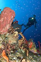 Underwater scenic with diver at Vertigo in Annaly Bay, .St. Croix.US Virgin Islands