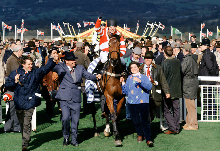 Winner being led to Winner's Enclosure at Cheltenham Racecourse for the National Hunt Festival of Racing, UK
