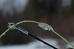Ice forms on the tip of a fly rod.