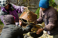 """The men responsible for recovering honey are the khudhapup (""""khuda"""" means honey in Rai). They empty the basket into a large, repoussé metal jar before filtering it."""