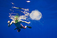 Snorkeler and Crowned Jellyfish, Cephea cephea, an offshore, pelagic species, Order Rhizostomeae - Root-mouth Jellies, Family Cepheidae, off Kona Coast, Big Island, Hawaii, Pacific Ocean.