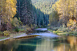 Idaho, North, Kootenai County, Enaville. The Little North Fork of the Coeur d'Alene River on an autumn morning.