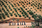 Line of women walking, near Niamey, Niger, 1986<br />