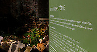 Plant History Glasshouse (formerly Australian Glasshouse), 1830s, Rohault de Fleury, Jardin des Plantes, Museum National d'Histoire Naturelle, Paris, France. View from the side of Information Board with details of the Glasshouse ecosystem. In the background are Selaginella plants.