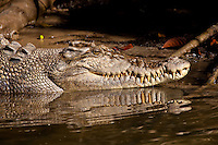 Crocodiles of 3 Continents