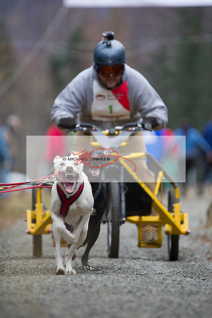 Scott Maruskie in the Four Dog Cart class, with lead dog Forte.  Photo for the Star by  Michael Dinneen
