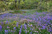 Camassia Natural Area in West Linn Oregon