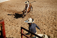 Fans of American rodeo will recognize bull riding, or Jineteo de Toros, with a few differences. Charreadas use smaller stock and must ride the animal until it stops bucking, much longer than the American 8-seconds. Charros earn points for the duration and difficulty of the ride as well as style.