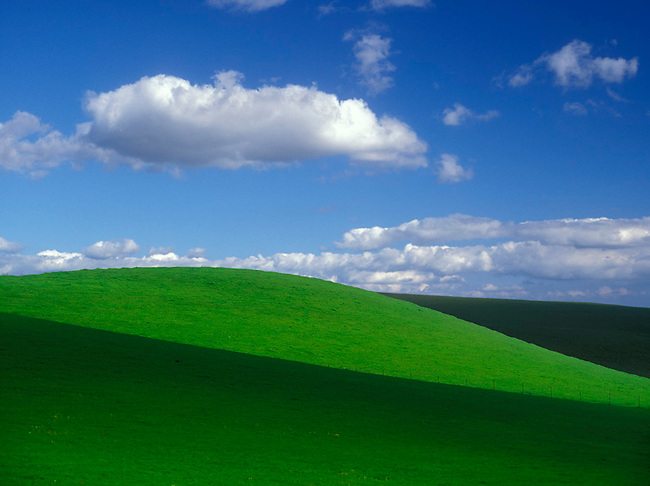Green hills in wine country