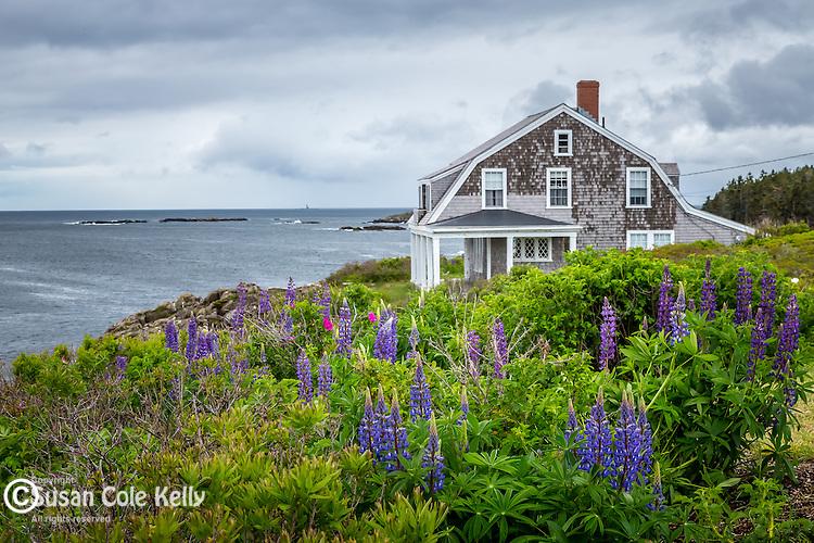 Coastal heath in the Harpswell Heritage Land Trust on Bailey Island in Harpswell, Maine, USA