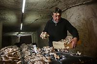 Europe/France/Centre/Indre-et-Loire/Loches: Champignonni&egrave;re: La Maison Gillard produit dans ses caves troglodytes  du Shitak&eacute; bio et des chanterelles depuis le d&eacute;clin du champignon de Paris - Philippe Gillard // France, Indre et Loire, Loches: Home Gillard product in its troglodyte caves of Shitake bio and chanterelles since the decline of fungus Paris - Philippe Gillard<br />  Auto N: 2013-126