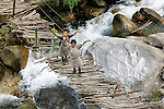 Two boys crossing a pedestrian bridge, Paro Valley, Bhutan