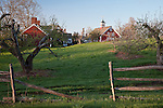 Apple orchard in Hollis, NH, USA