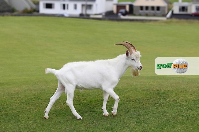 South of ireland amateur golf championship