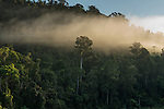 Mist over Wooroonooran forest