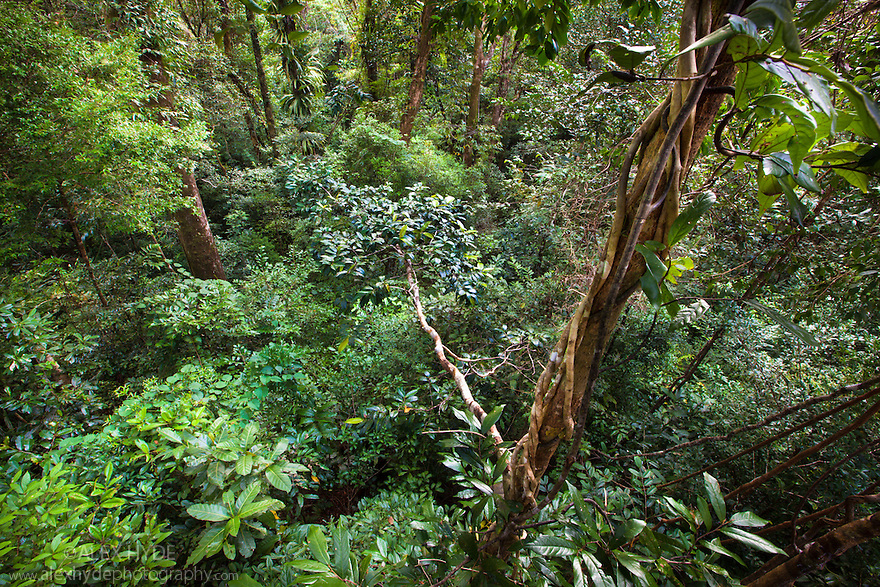 Lowland rainforest viewed from canopy platform, Masoala Peninsula National Park, north east Madagascar.