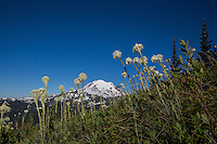 Mt. Rainier rises above the Bear Grass along the Naches Peak Loop Trail.