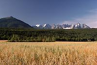 Field of Oats and Seven Sisters Mountain Range (Coast Mountains) along Highway 16, near Gitwangak (Kitwanga), Northern BC, British Columbia, Canada,