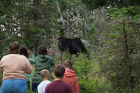 Visitors to Isle Royale National Park observe moose at Rock Harbor.