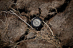 A sprinkler head on fairway of the abandoned  Northgate Golf Course in Reno, Nevada, May 22, 2012.