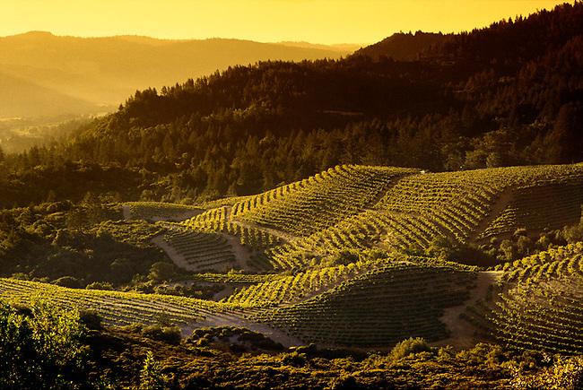 Vineyards on Diamond Mountain near Calistoga