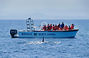Orca whale watching tour with 5 Star Charters off the west coast of San Juan Island, Washington.