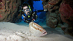 DIver with Nassau Grouper, Little Cayman Island