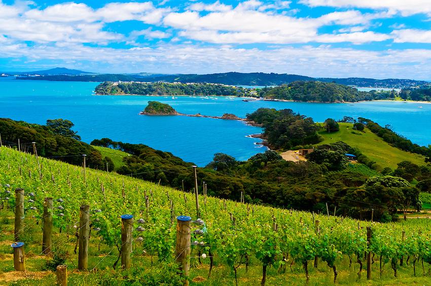 Te Whau Vineyard, Waiheke Island, Hauraki Gulf, near Auckland, New ...: blaineharrington.photoshelter.com/image/I0000QzA2DihML2A