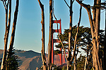 The Golden Gate Bridge in San Francisco, CA seen through the trees at sunset