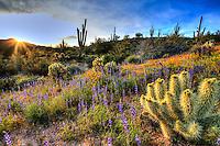 Magical Wildflowers in Arizona