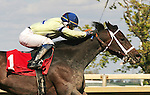 Parx Racing Images