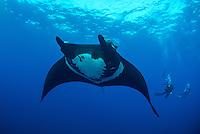 Giant Manta, Manta birostris and divers, San Benidicto, Revillagigedo Islands, Mexico, Pacific Ocean