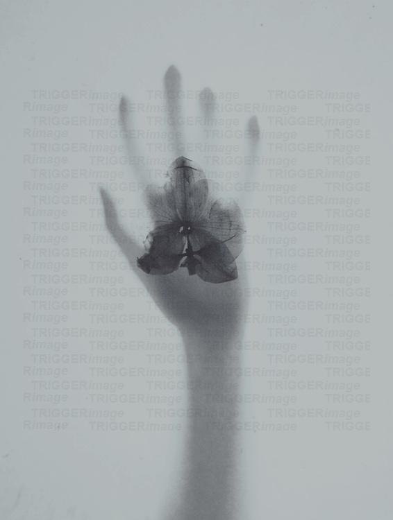 Photo of a female hand and orchid pressed against glass.