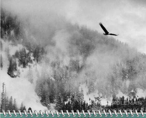 """January of the 2012 Birds of a Feather Calendar.  Photo is called """"Bald eagle in foggy flight""""  and is Black and white of a bald eagle is in flight with wings spread over snow covered mountains and trees with fog rolling across the valley."""