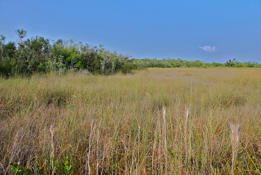 Typical Landscape at Everglades National Park, Florida, USA