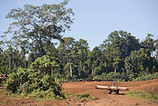 Ndrahong logging camp and pond, run by Rimbunan Hijau- Malaysian logging giants, on Manus Island, Papua New Guinea, Tuesday 30th September 2008.