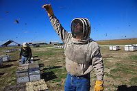Brad Campbell from North Dakota keeps 12,000 hives with his father-in-law, mainly for honey production. He shows the height that the hives can reach with their honey supers by the end of summer.