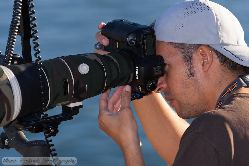A closeup of Maxis Gamez (of http://www.gvisions.org/) photographing pelicans at La Jolla Cove.  Maxis is using a Canon 5D with an 800mm lens attached wrapped in green camouflage on a tripod with external flash.