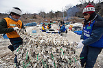"""Volunteers from NGO Peace Boat help fisherman Hisashi Abe restore his aquaculture business by preparing oyster shell """"cages"""" in Samenoura, Ishinomaki, Miyagi Prefecture, JapanPhotographer: Robert Gilhooly"""