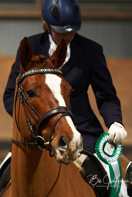 Prize giving ceremony. Helen Johansson and Strano (Hejbols De Strano, e De Noir - Golfstrom II, f 2007, breeder Per Torp, owner Helen Johansson) are the winners in dressage competition Latt A:3 at Malmo Ridklubb. They reached 71,571% and became the proud club champions for 2013.<br /> Malmo, Sweden.<br /> January 2014.<br /> Only for editorial use.