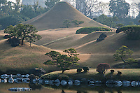 Stepping stones line the edge of the lake and a miniature Mount Fuji has been created out of the hill at the Suizen-ji water garden